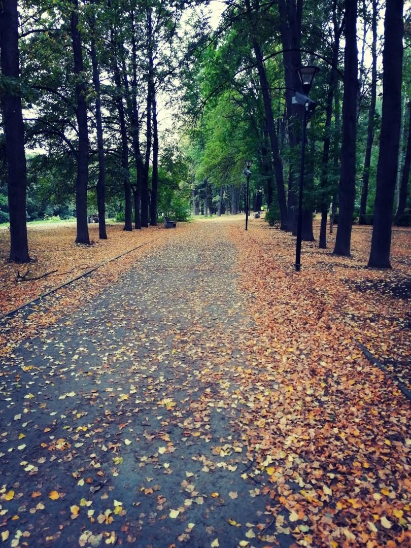 Осень в парке ямка