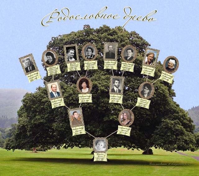 Родословное древо гок